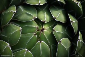 Biología, las plantas